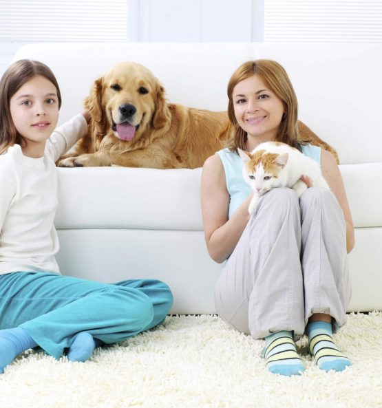 Family-Pets-Carpet